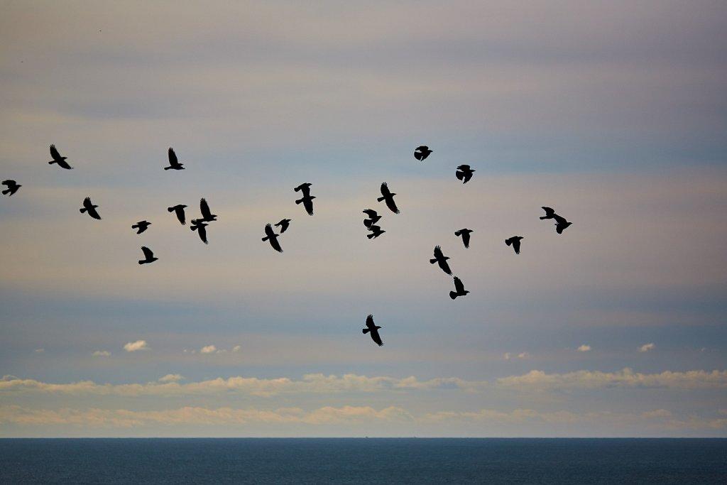 20210207-11-56-12-pilor-oiseaux.jpg
